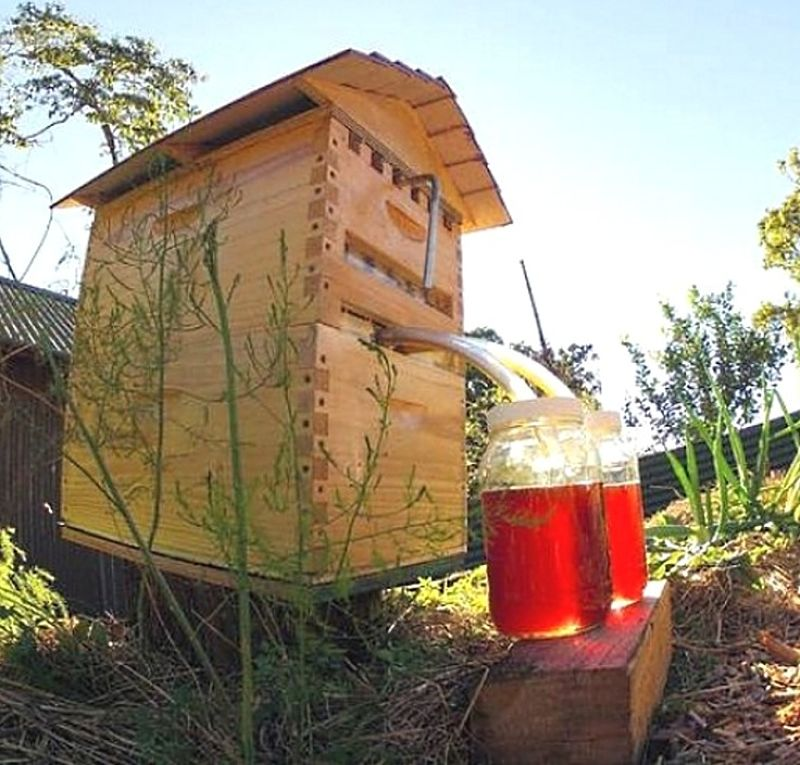 Modern 'Flow-Hive' designs make it much easier to harvest honey from a backyard hive