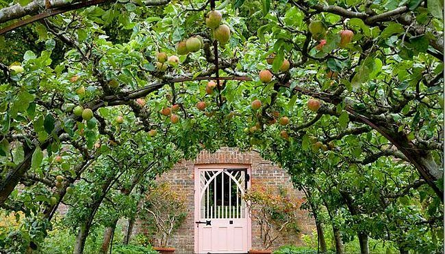 A lovely arch decorated with Espalier