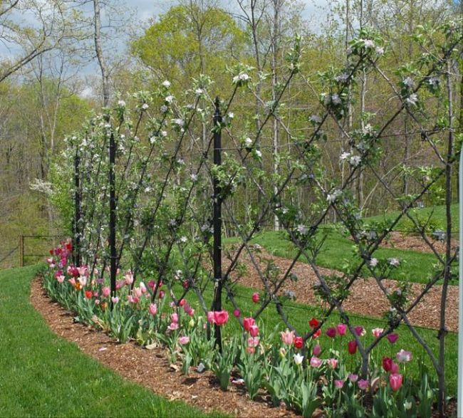 Nice Espalier design using a frame bordered by flowers
