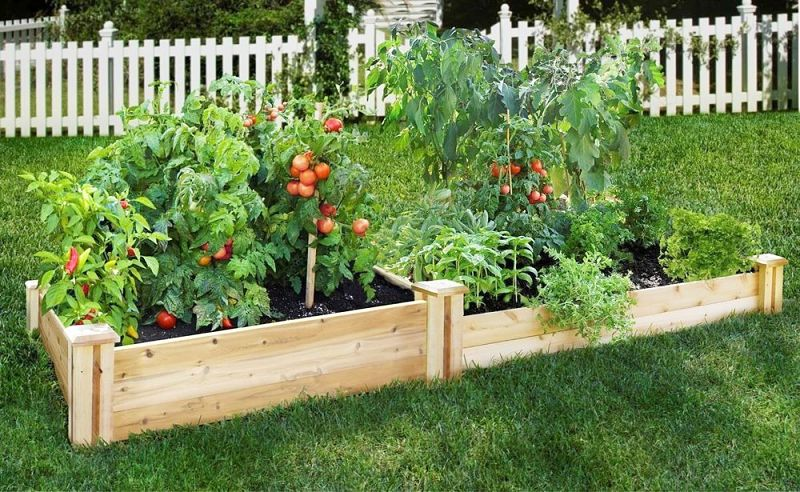 Raised beds make it easy to establish and maintain your fast growing vegetable garden