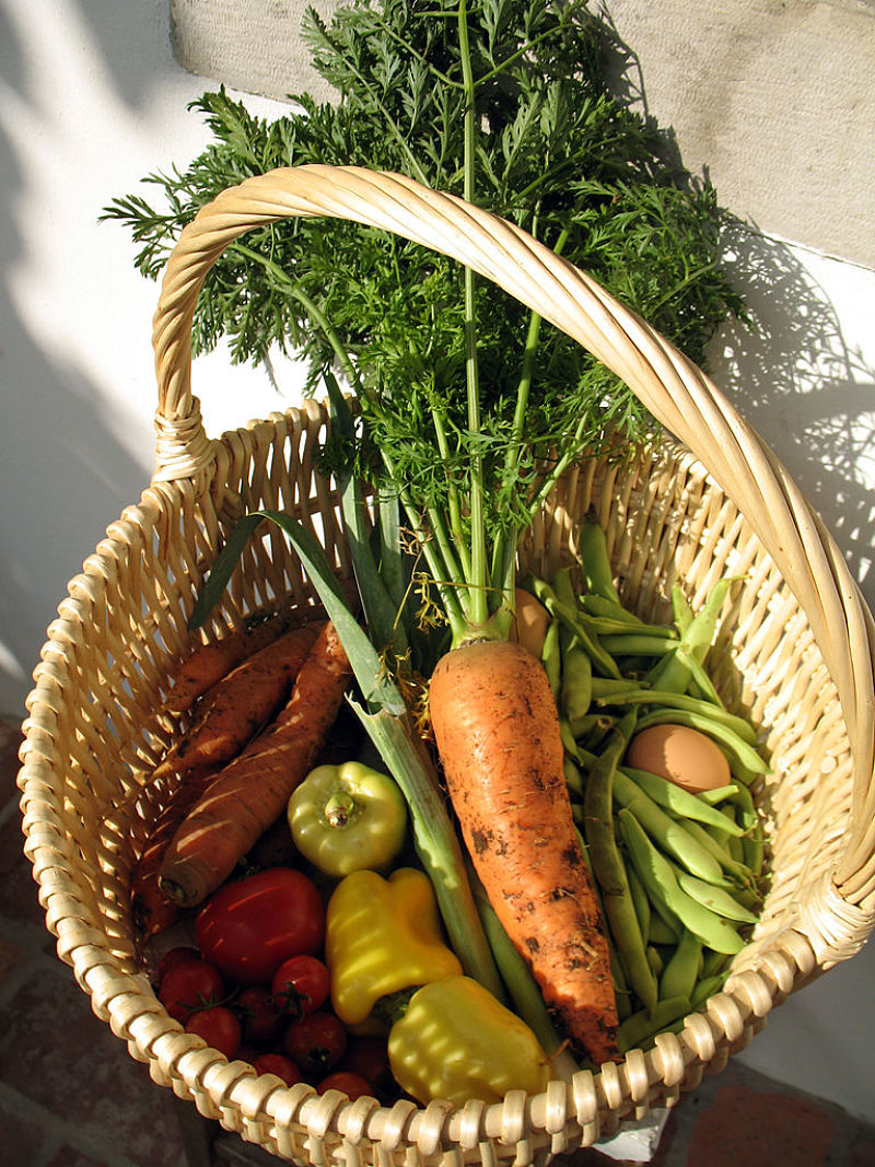 It is a delight to harvest your own vegetables grown in your own garden