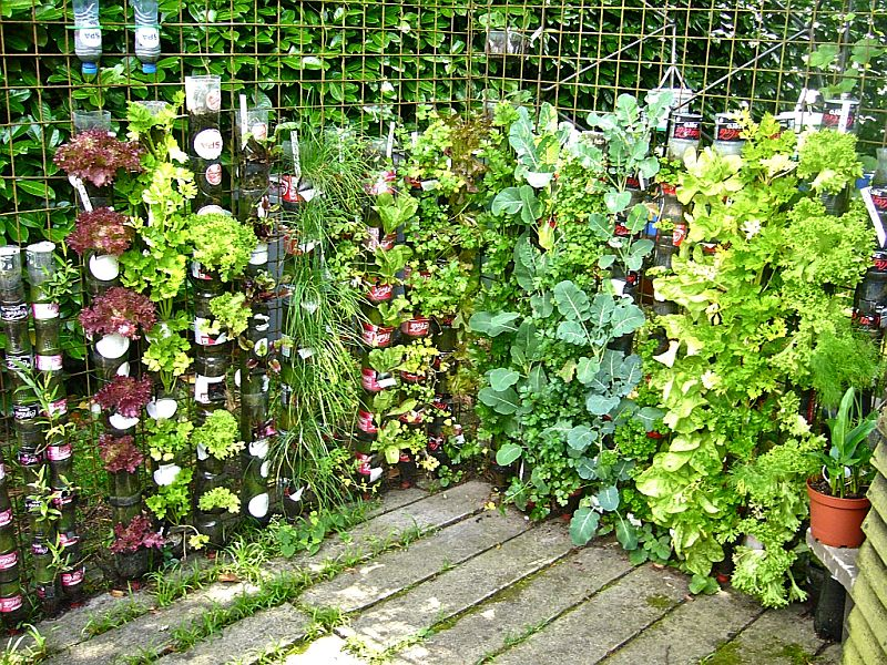 Vertical gardens allow maximum yields from a small space