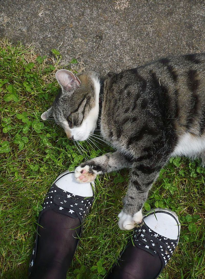 Cats enjoy it when their owners work in the garden. They mind the shoes!