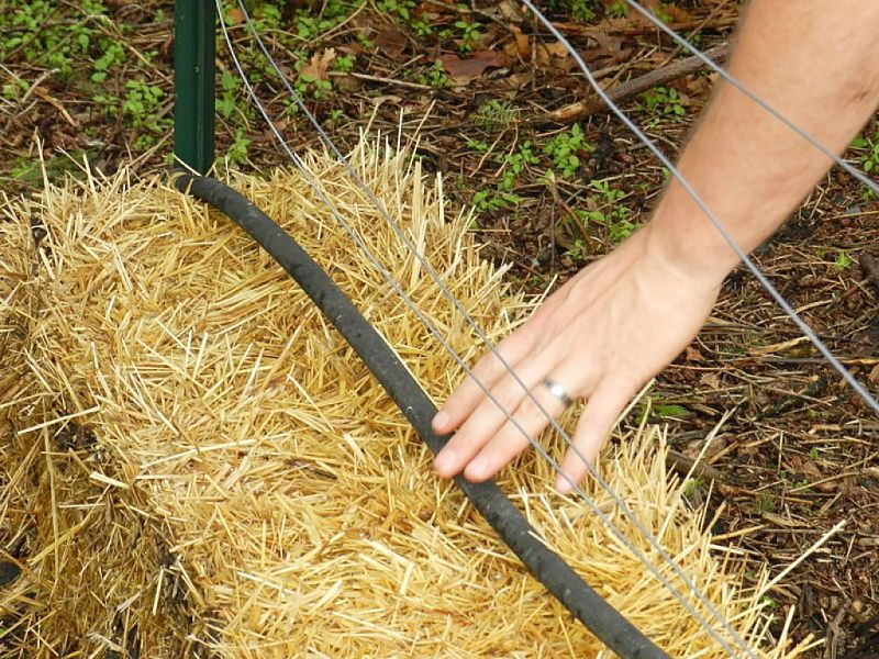 Planting Seedlings into Straw Bales Tip 3