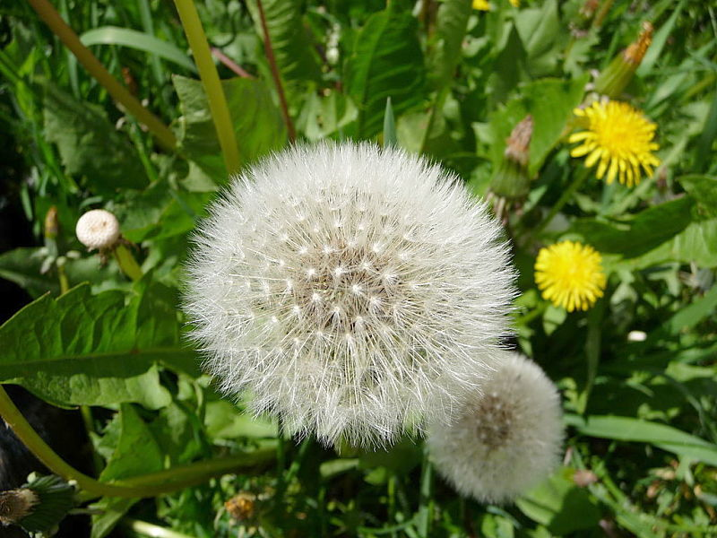Weeds are prolific seed producers which makes them so effective
