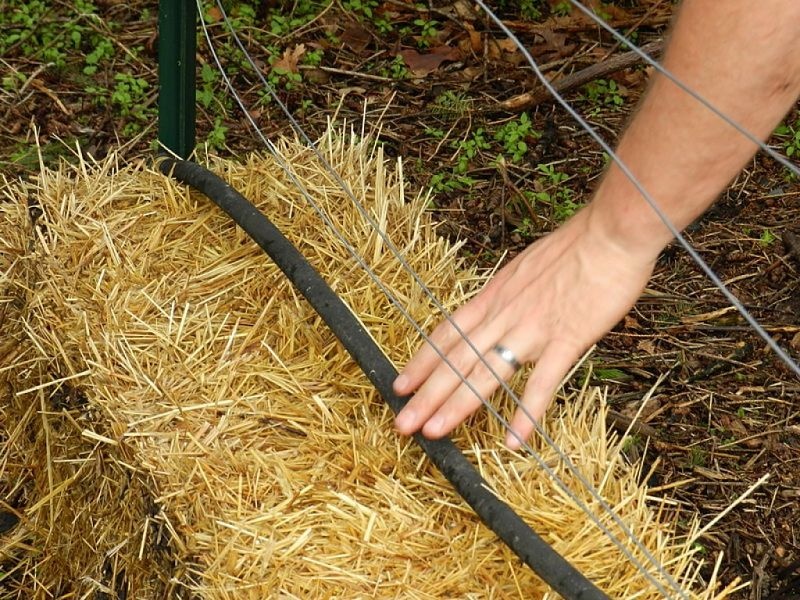 Planting directly into straw bales is a good way to start an organic garden as it develops new soil for a raised bed