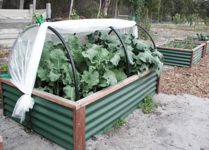 Raised beds make it easier to maintain, weed and harvest vegetables. It is easy to install a plastic cover to make a mini-hothouse