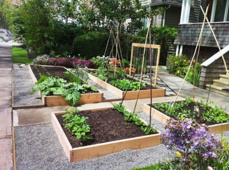 Many tiny lawns in urban areas are being replace by mini vegetable gardens, often in raised beds.