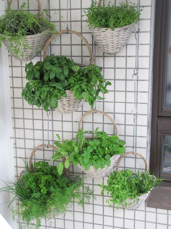 Hanging pots is a great way to get started with vertical gardens on a balcony. It is a great way to garden with limited space.