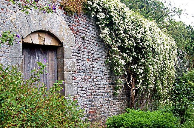 Vines and creepers make excellent wall coverings and garden elements. Discover how to make a successful vertical garden in this article