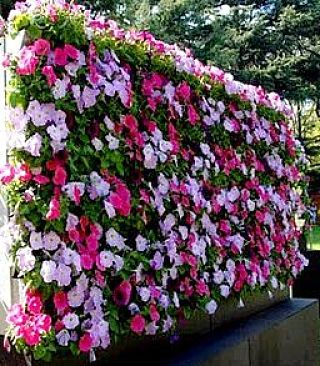 Vertical flower garden can provide a delightful display