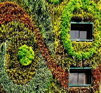 Vertical gardens can create a design feature on a wall - very attractive!