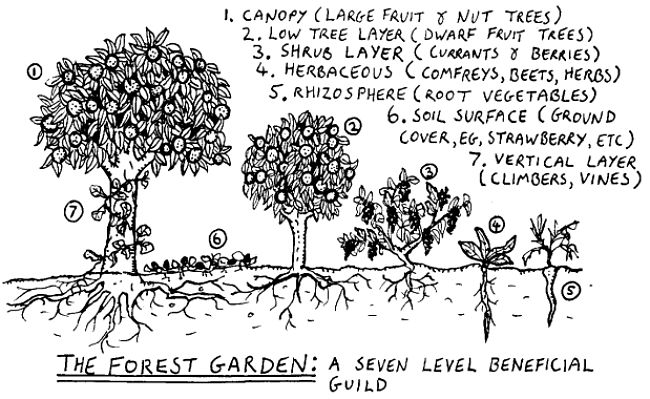 Permaculture promotes growing plants in gardens with a full set of layers