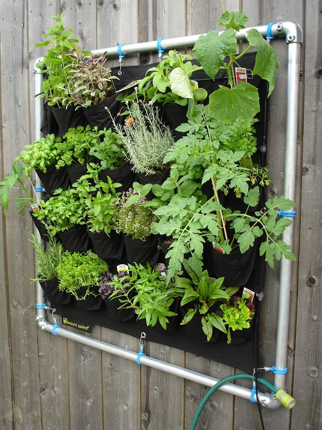 Vertical vegetable garden with herbs and tomatoes