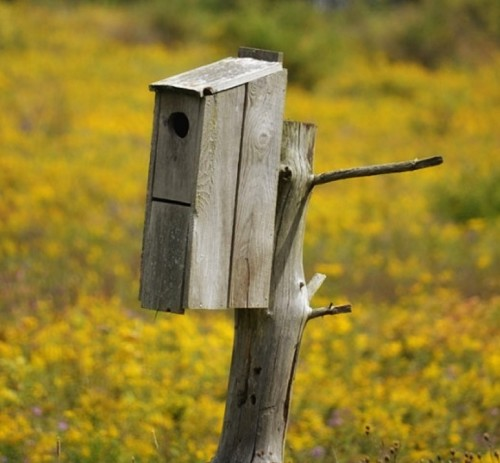 The right nest boxes for local birds can encourage nesting