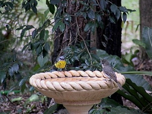 Bird baths attract birds, but provide cover and good environs for wildlife